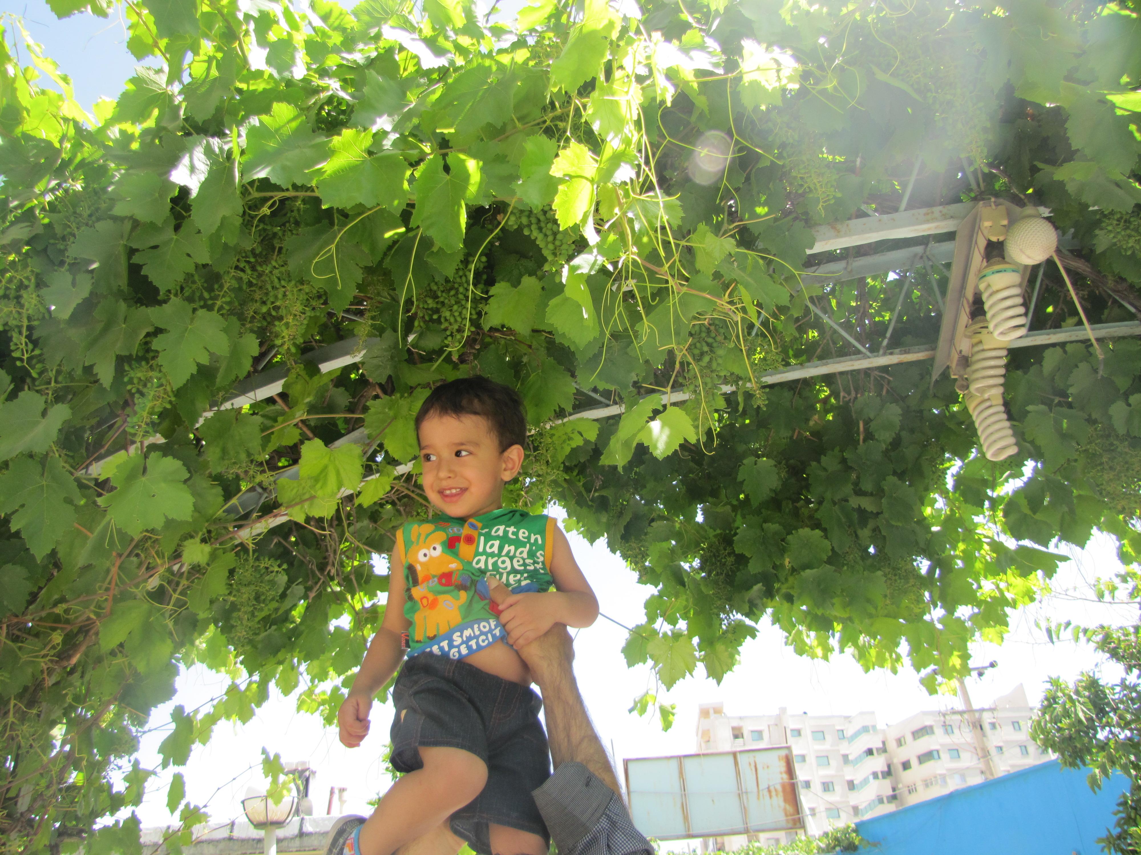 مهدی یار و درخت های انگور باغ